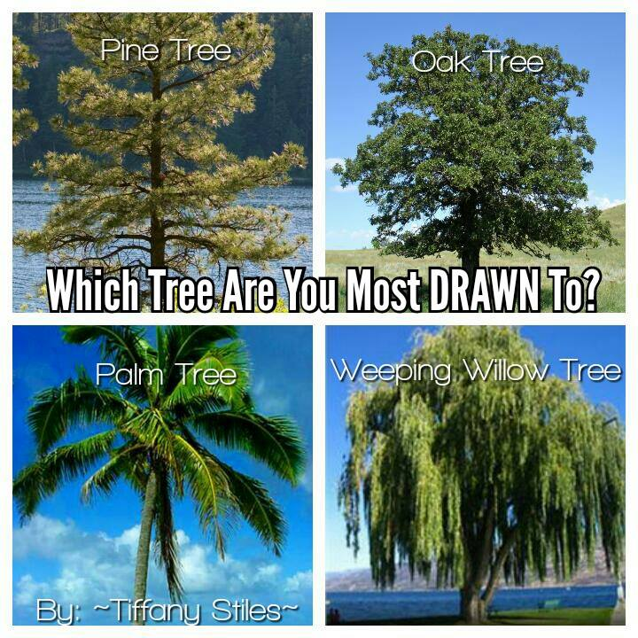 treeoracle