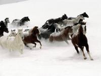 Horses-200x150
