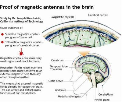 magnetite-engl